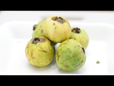 How to Eat Mexican Guava | White Guava Taste Test