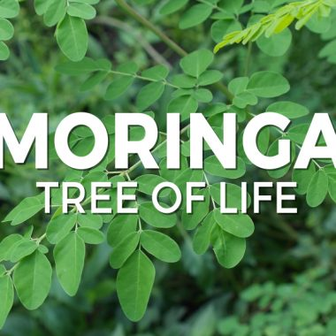 Moringa tree of life