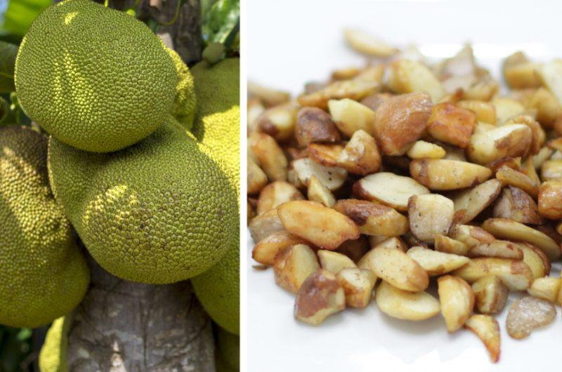 Hanging jackfruit next to jackfruit seeds