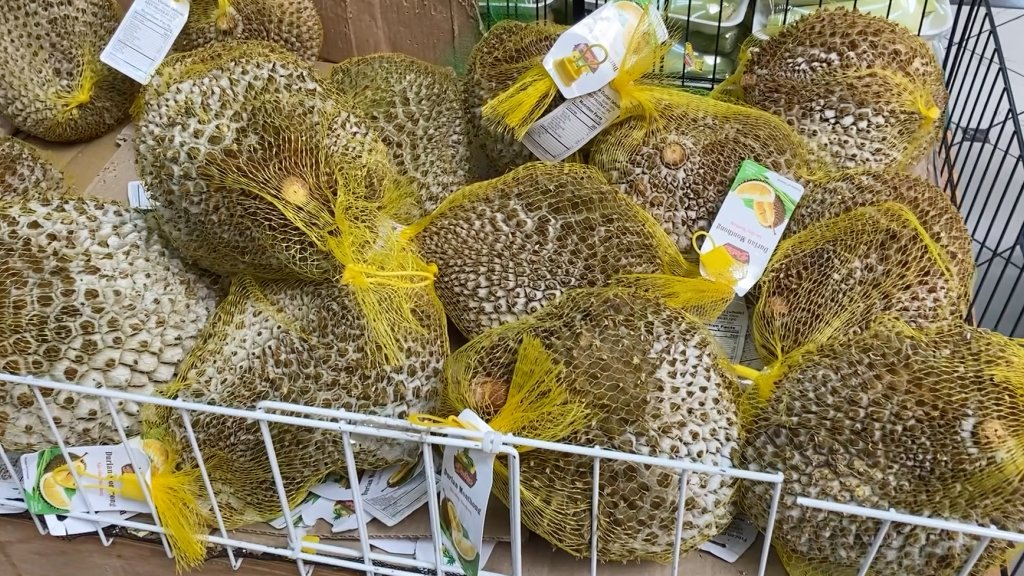 Durian fruit in yellow mesh bags at supermarket.