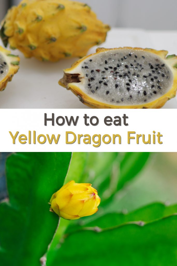 how to eat yellow dragon fruit pin for Pinterest