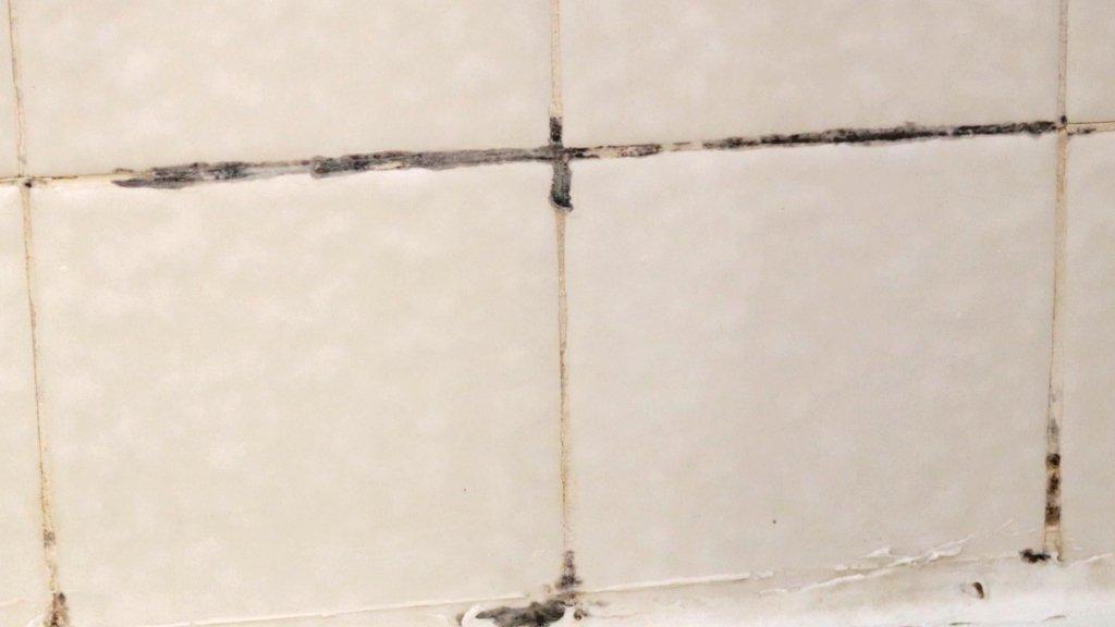 Black mold on shower tile in bathroom.