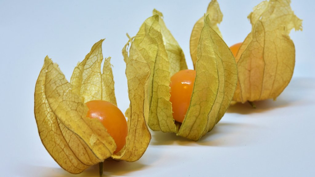 Three goldenberries on a white background.