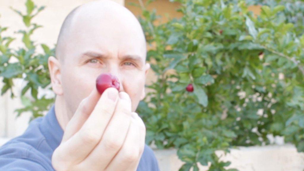 Man holding an Acerola cherry.